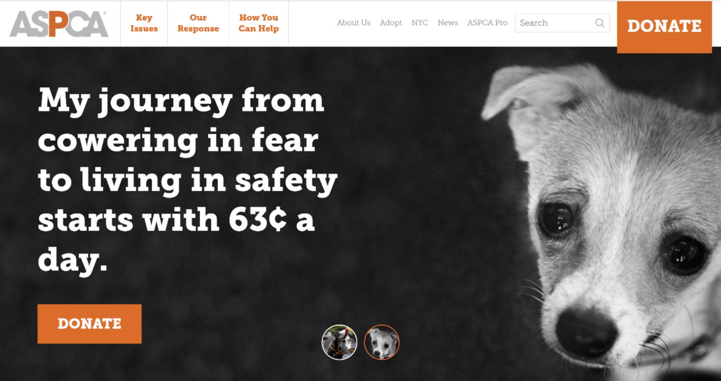 ASPCA Homepage-1