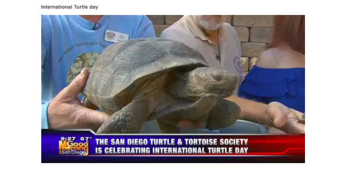 classy-post-turtle-image.jpg
